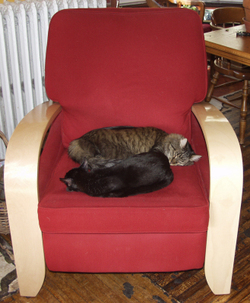 Kitties_on_chair