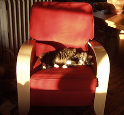 Mookie_on_chair